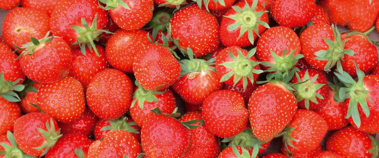 rote_erdbeeren